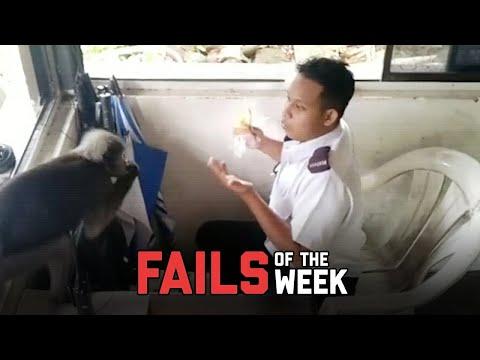 Monkeys Do Weird Things – Fails of the Week   FailArmy