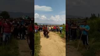 Bukefal Dabile 2017