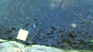 Hungrige Fische