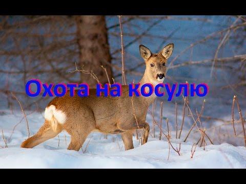 Охота на косулю 27.12.16г.  Hunting for deer