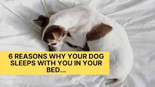 6 Reasons Why Your Dog Sleeps With You In Your Bed
