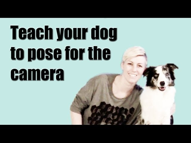 Teach your dog to pose for the camera on cue - dog training clicker kikopup kikopup
