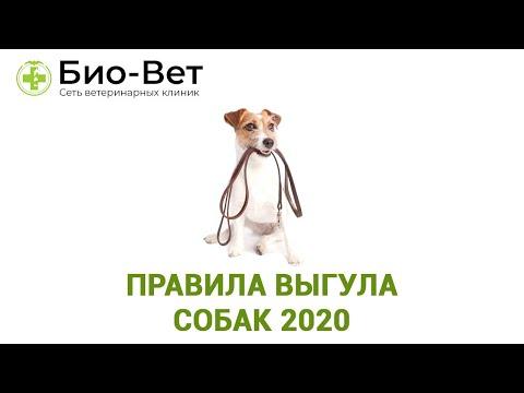 Правила Выгула Собак 2021 / Где Можно И Нельзя Выгуливать Собаку / Био-Вет