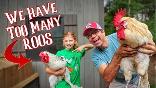 What Are We Doing With ALL These ROOSTERS?!? 🐔🐓