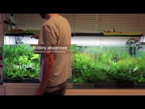 peHa:68 - Studio Akwarystyki Naturalnej