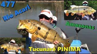 Um dia com os grandes Tucunarés Pinimas do Rio Acari - Fishingtur na TV 477