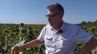 Семена устойчивые к ЕвроЛайтингу Экватор 1,0-1,2л/га. Подсолнечник устойчив к засухе и шести расам заразихи A-F. от компании ТД «АВС СТАНДАРТ УКРАЇНА» - видео 1