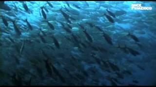 Nuestros Mares - Mar de Cortés