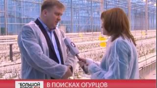В поисках огурцов. Большой город live 19/01/2017 GuberniaTV