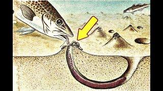 Как сохранить морских червей для рыбалки