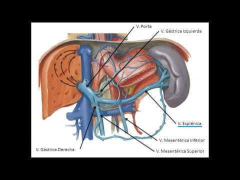 Hipertensão objetivamente