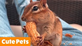 Adorable Silly Pets | Funny Pet Videos