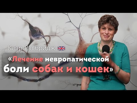 Лечение невропатической боли собак и кошек. Managing Neuropathic Pain. Pain brain