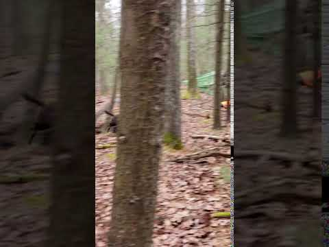 Video Of Michaux State Forest, PA