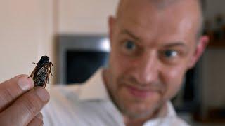 video: Take it from me, the cicadas swarming Washington DC don't taste that bad