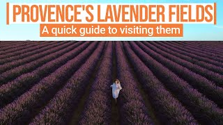A quick guide to visiting Provence's blooming lavender fields