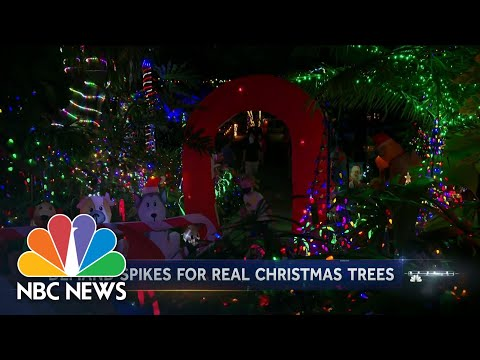 Real Christmas Tree Sales Soar | NBC Nightly News