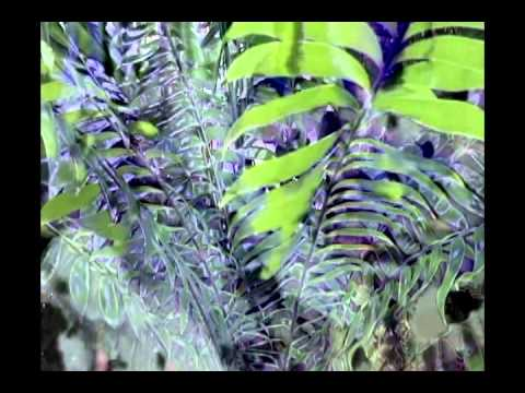 Between The Leaves - Uglyhead - The Garden
