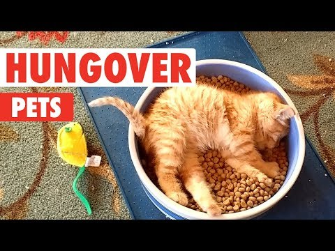 Hungover Pets | Funny Pet Video Compilation 2018