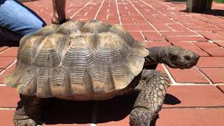 Let's Talk About Summer with Mohave the Desert Tortoise