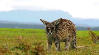 Incredible Australian WILDLIFE