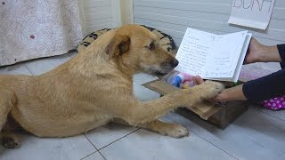 Sad Shelter Dog Is So Excited To Read Unexpected Letter From Adoptive Family