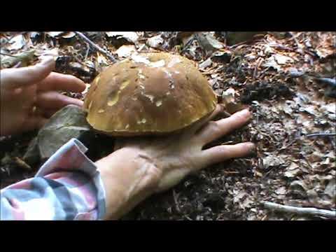 Mezzi da un terriccio e un fungo di risposte di elemento
