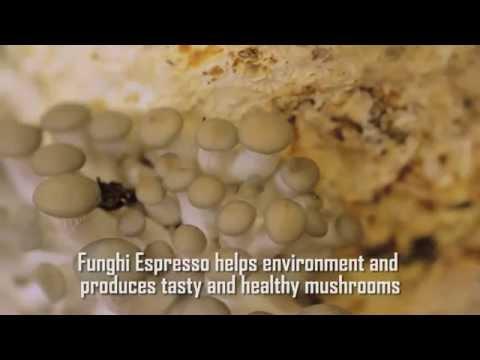 Il fungo di unghia di fotografia iniziato