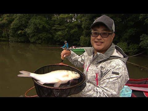 【釣り百景】#262 秋の野池でへらぶな釣り