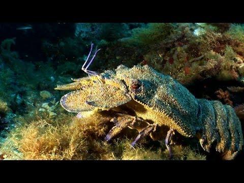 Bahia-Poseidon Tauchen, Ciutadella, Menorca/ Balearen, Menorca,Spanien