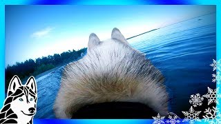 HUSKY BEACH DAY | MEMPHIS GOES TO THE BEACH | Swimming dogs eye view