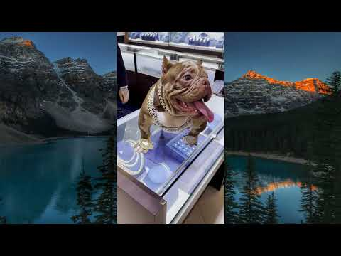 Dog, dog adoption, dog rolex, #Shorts