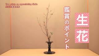 『いけばな鑑賞方法(生花編)/The Points On Appreciating Ikebana (Shoka) /插花作品鑑賞方法(生花篇)』