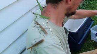 Praying Mantis vs ME! Insane: COVERED IN THEM