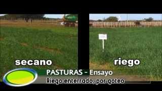 preview picture of video 'Riego enterrado por goteo en el Valle Argentino, La Pampa'