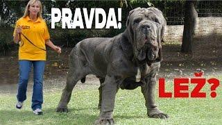 d49384d2490 Top 10 na světě Největší psi видео Скачать бесплатно