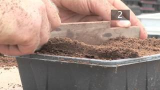 How To Plant Seeds in Starting Trays