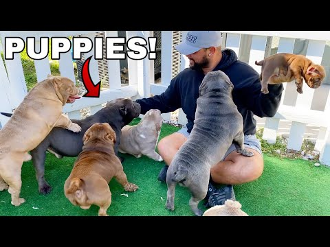 Picking Out My First Dog from Exotic Bully Puppy Farm! *CUTE*
