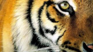 -taming the tiger-