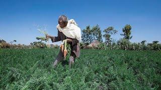 Brasil reduz em 50% o número de pessoas que passam fome