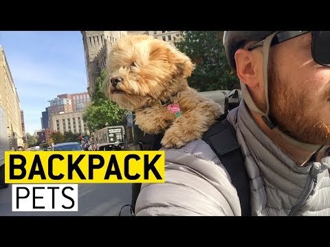 Animals in Backpacks || JukinVideo