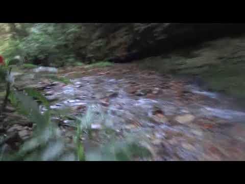 Caminho para cachoeira do Salto Andorinhas em Ascurra