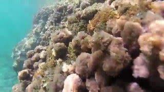 Fauna i Flora Morza Śródziemnego