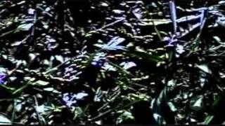 Cold Case - The Murder of Paige Pratt