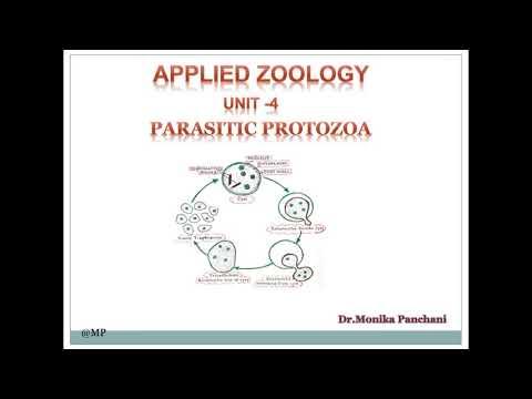 Parazita peték a székletben