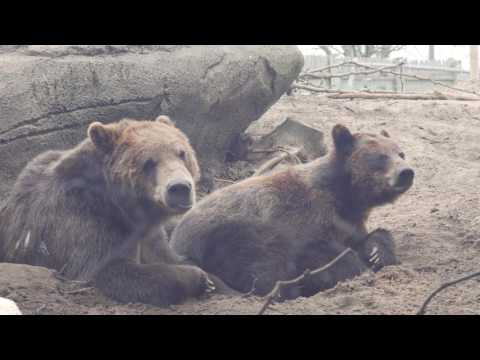 Brown Bear Cuddle Sesh