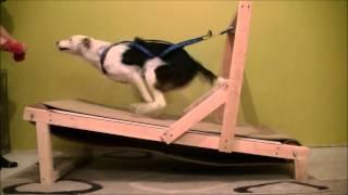 Смотреть онлайн Домашняя беговая дорожка для собак