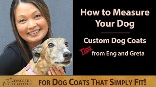 How To Measure Your Dog For A Custom Dog Coat