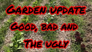 East Texas Garden update-the GOOD the BAD and the UGLY