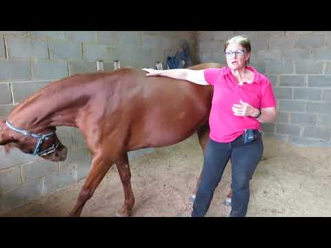 Ultimate Equine Certification Bundle Review - YouTube